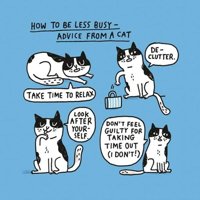 Cartoon - HOW TO BE LESS BUSY- ADVICE FROM A CAT DE CLUTTER TAKE TIME TO RELAX LOOK AFTER YOUR SELF DON'T FEEL GUILTY FOR TAKING TIME OUT (I DON'T!)