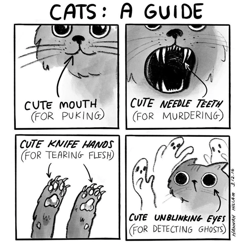 Text - CATS A GUI DE CUTE NEEDLE TEETH (FOR MURDERING) CUTE MOUTH (FOR PUKING CUTE KNIFE HANDS FOR TEARING FLESH) CUTE UNBLINKING EYES FOR DETECTING GHOSTS) HANNAH 3.12.16