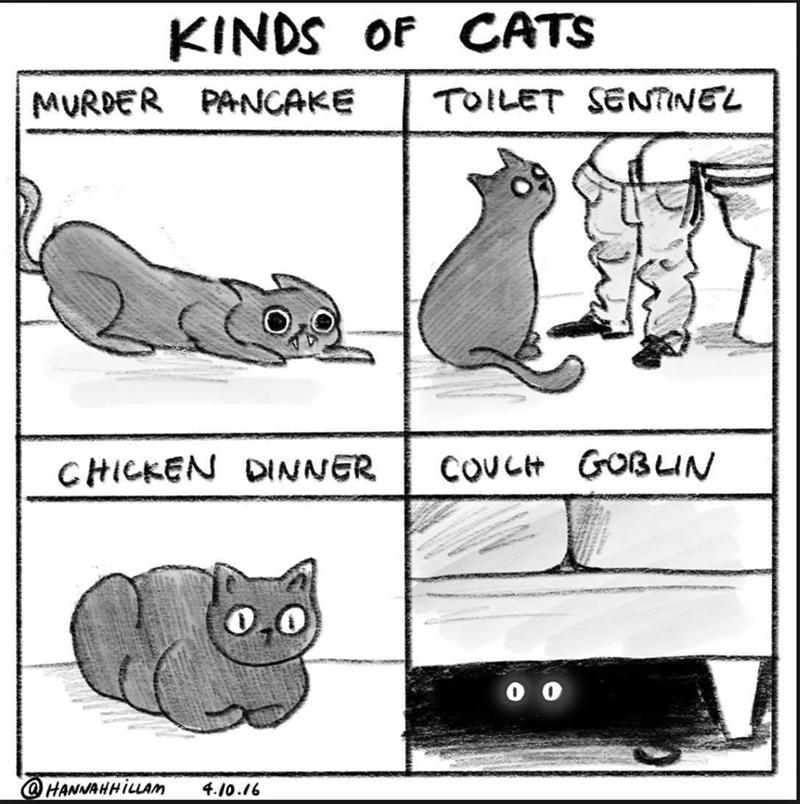 Text - KINDS OF CATS TOILET SENTINEL MURDER PANCAKE COVCH GOBLUN CHICKEN DINNER @HANNAHHILLAM 4.10.16
