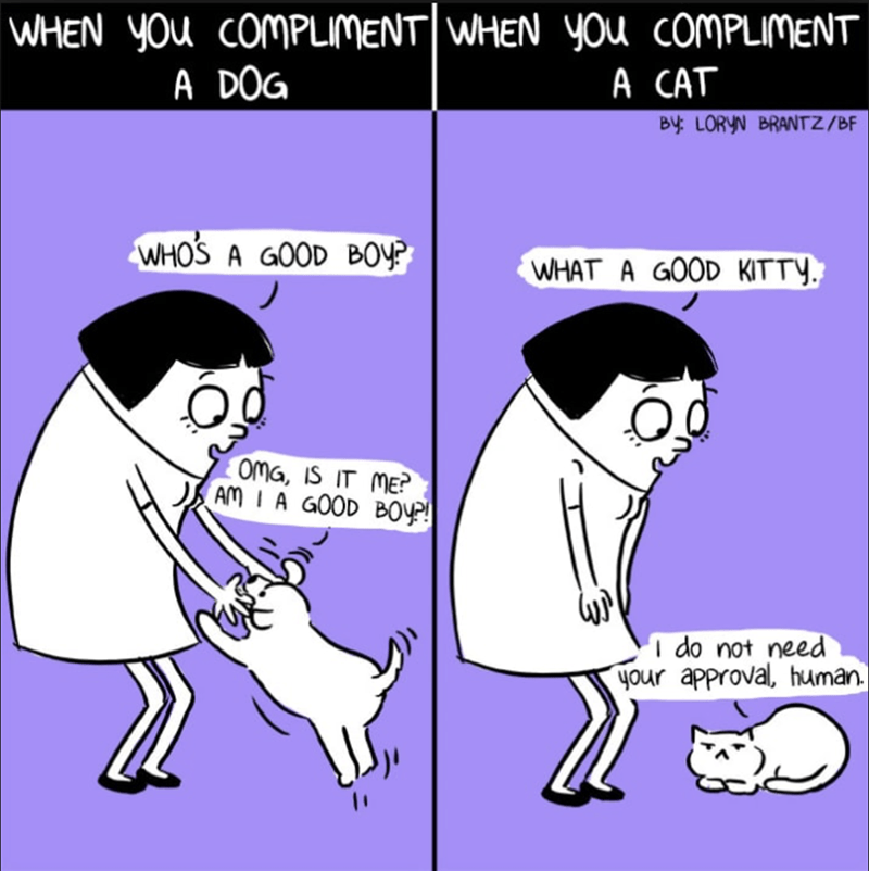 Cartoon - WHEN YOu COMPLIMENT|WHEN YOU COMPLIMENT A DOG A CAT By LORYN BRANTZ/BF WHOS A GOOD BOY? WHAT A GOOD KITTY. OMG, IS IT ME? AM I A GOOD BOy! I do not need your approval, human.