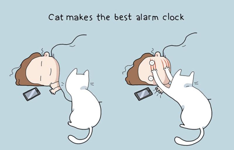 Cartoon - Cat makes the best alarm clock