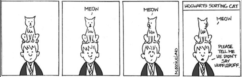 Cartoon - HOGWARTS SCRTING CAT MEOW MEOW MEOW PLEASE TELL ME HE DIDN'T SAY HUFFLEPUFF |BE MRCIULiANO