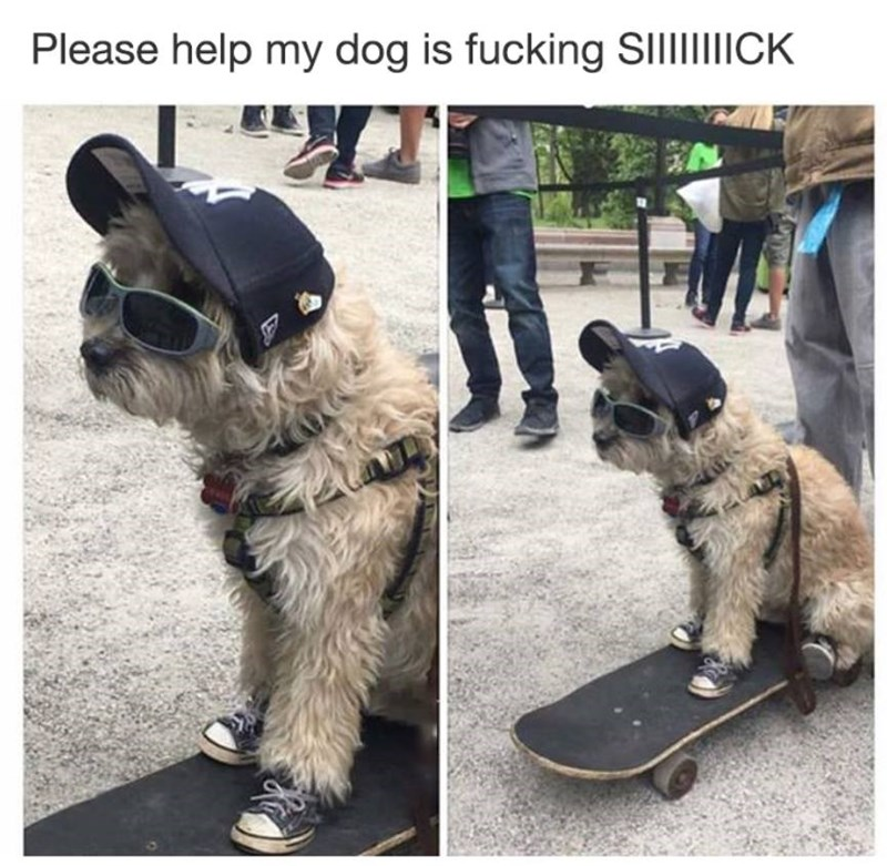 Funny meme about dog being sick, sunglasses, skateboard.