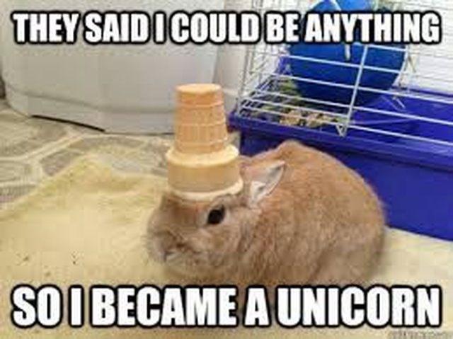 rabbit became a unicorn