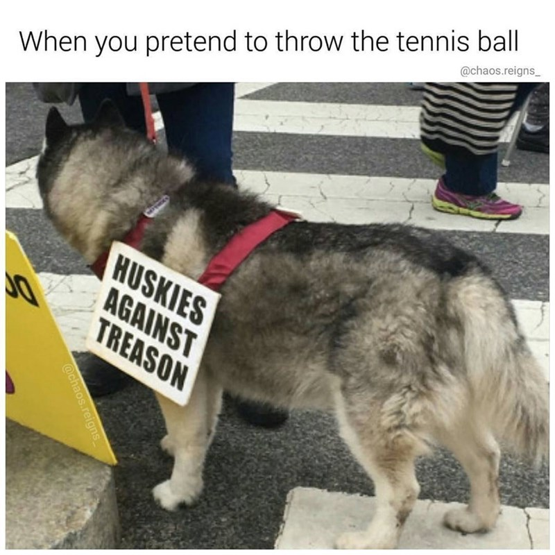 Funny meme about when people fake throw the tennis ball to dogs.