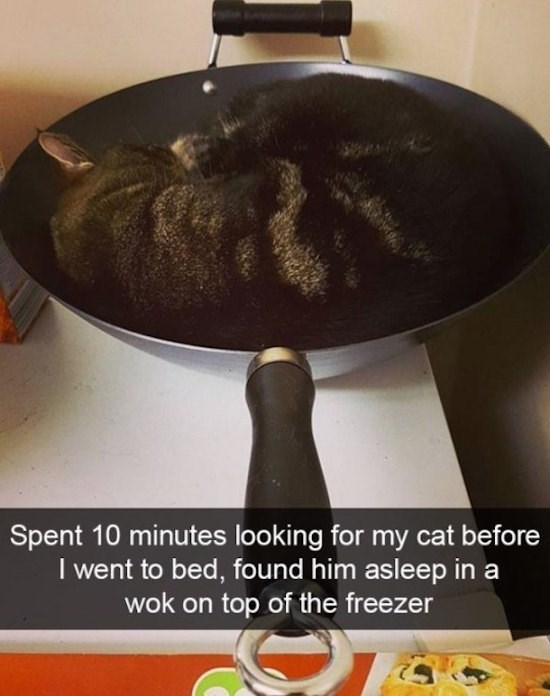 caturday - Frying pan - RS Spent 10 minutes looking for my cat before I went to bed, found him asleep in a wok on top of the freezer