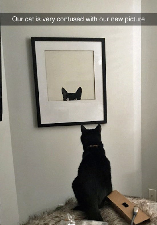 caturday - Black cat - Our cat is very confused with our new picture