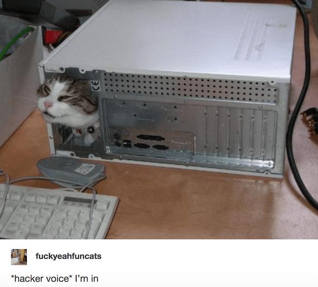 "caturday - Cat - fuckyeahfuncats ""hacker voice I'm in"