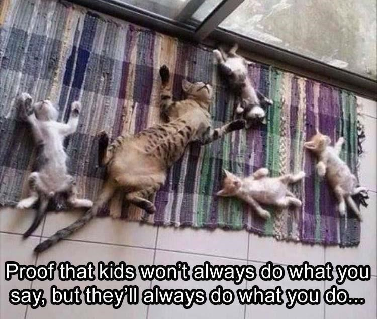 caturday - Animal shelter - Proof that kids won't always do what you say, but theyll always do what you do.o