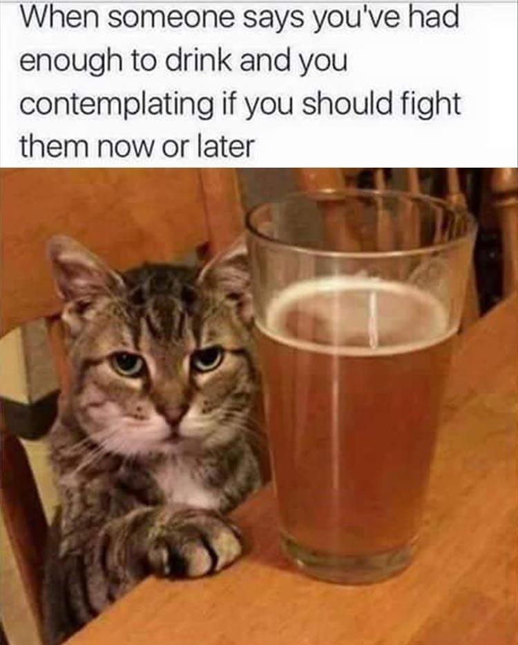 caturday - Cat - When someone says you've had enough to drink and you contemplating if you should fight them now or later