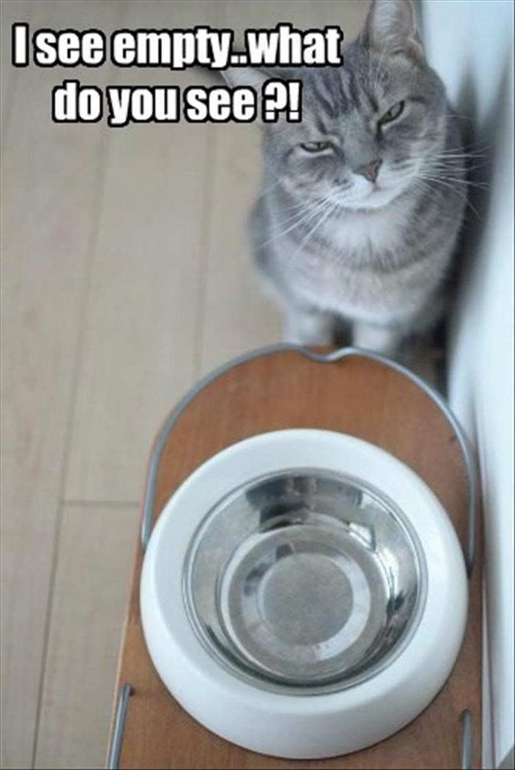 caturday - Cat - Isee empty what do you see ?!