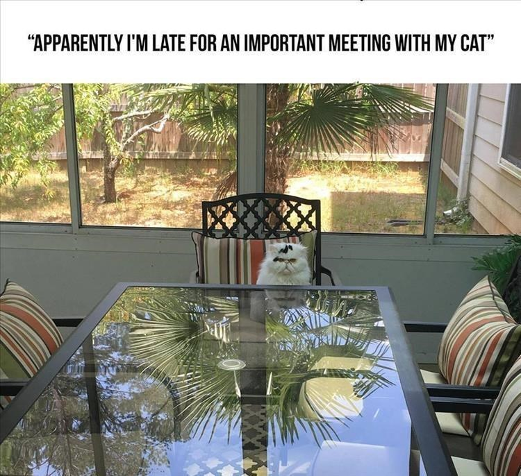 """caturday - Property - """"APPARENTLY I'M LATE FOR AN IMPORTANT MEETING WITH MY CAT"""""""