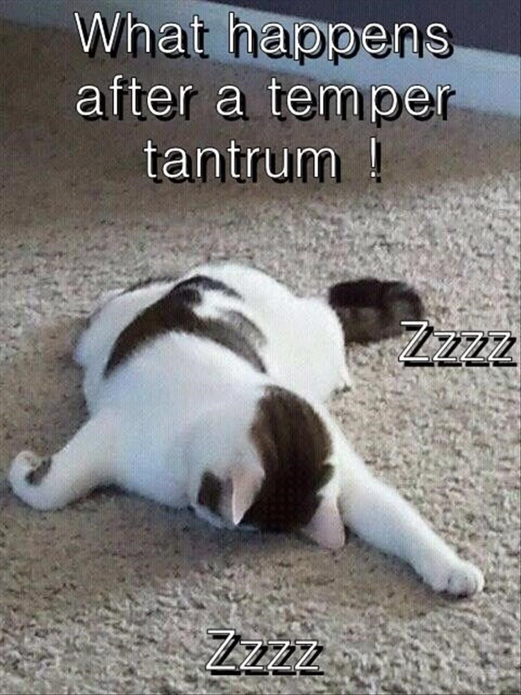 caturday - Canidae - What happens after a temper tantrum! Zzzz Zzzz