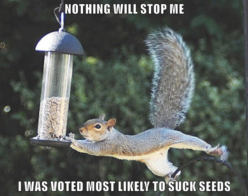 wordplay pun of squirrel diving for some seeds