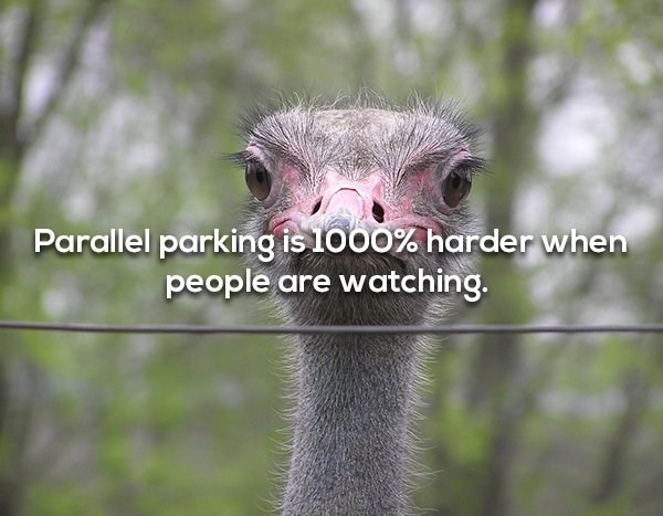 Ostrich - Parallel parking is 1000% harder when people are watching.