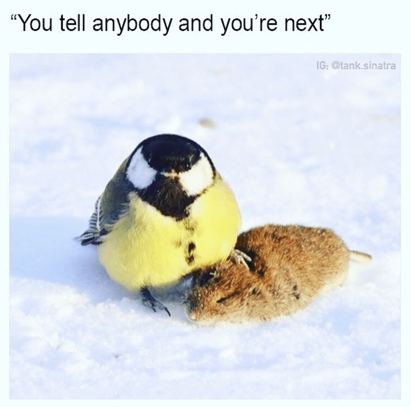 Bird with a mouse and threatening you if you tell anyone