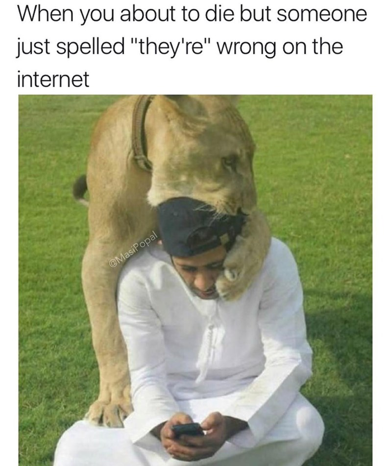 funny meme about when you're about to die but you have to correct someone's spelling, lion eating man's head as he is on his phone.