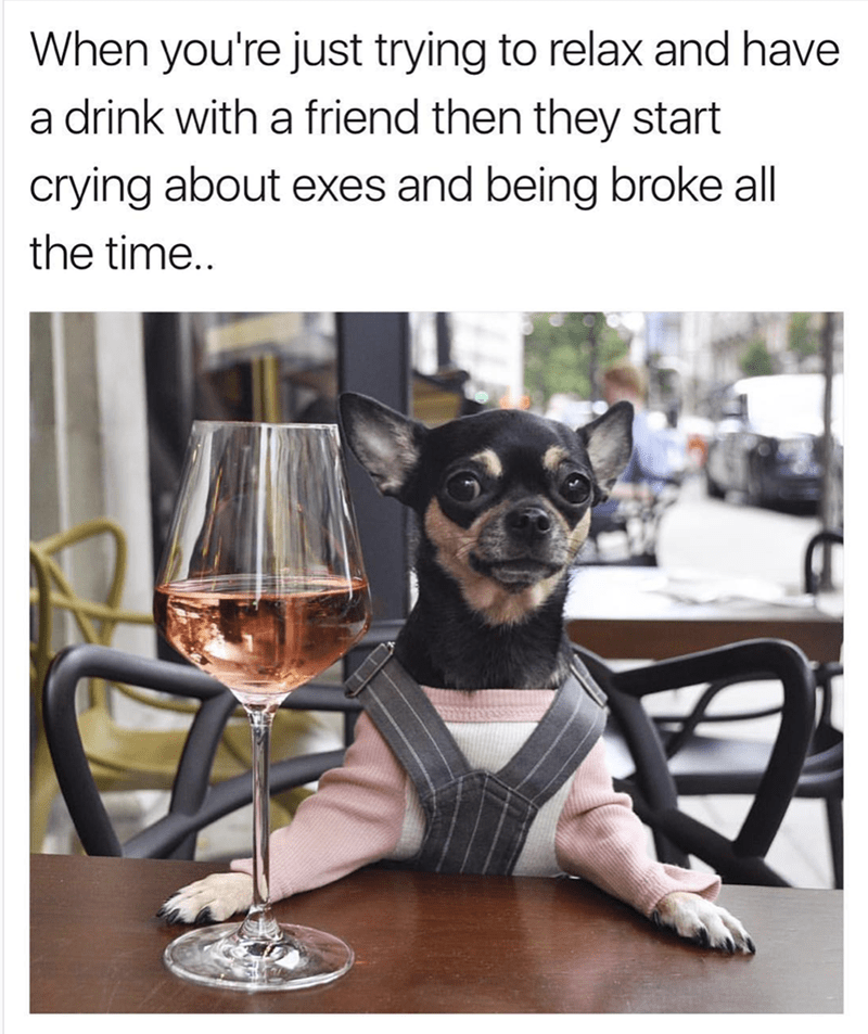 Confused Chihuahua meme about just trying to relax and they all going on about exes and being broke all the time.