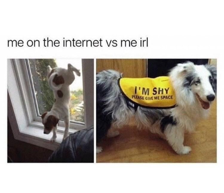 dogs internet Memes - 9078188544