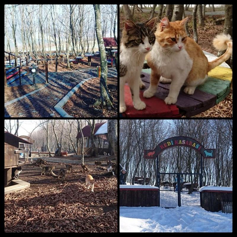 cat town in Turkey, cat climbing