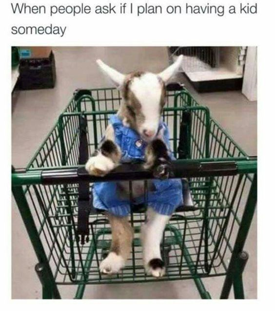 goat meme about not planning to raise kids with picture of baby goat in seat of shopping cart