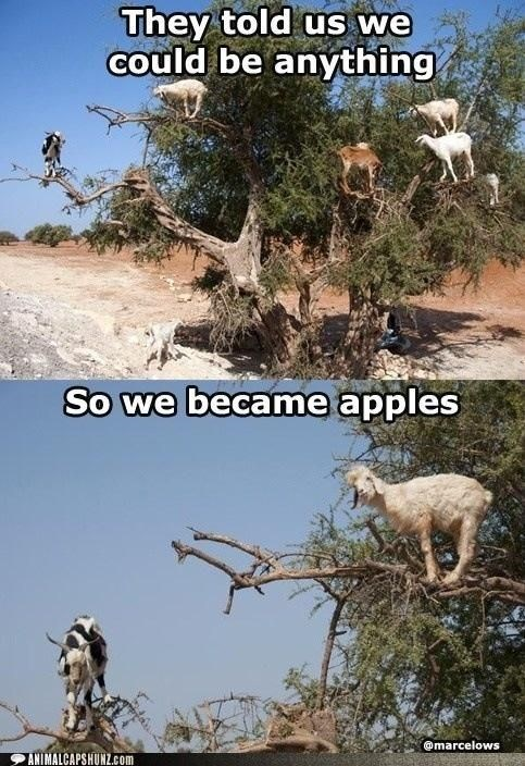 goat meme about fulfilling yourself with pictures of goats climbing a tree