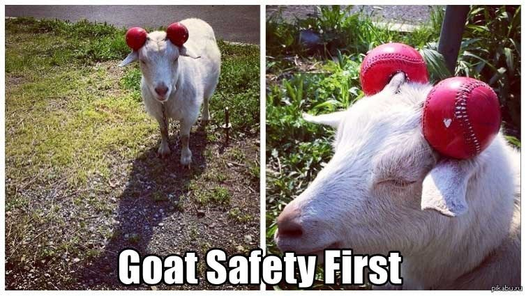 goat meme about being safe with picture of goat that has its horns covered by balls