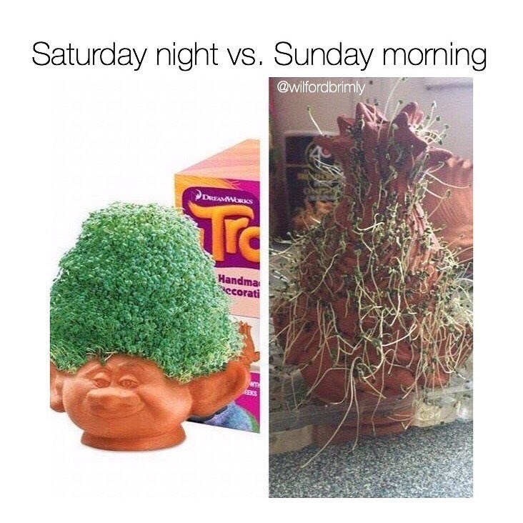 Funny meme about the weekend - looking good saturday night and then terrible on sunday, using chia pets as a description.
