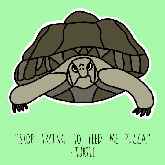 "Tortoise - ""STOP TRYING TO FEED ME PIZZA"" -TURTLE"
