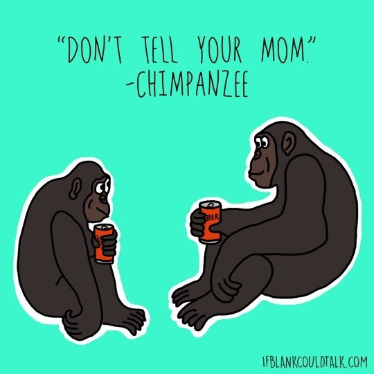 "Primate - ""DON'T TELL YOUR MOM"" -CHIMPANZEE OFER IFBLANKCOULDTALK.COM"