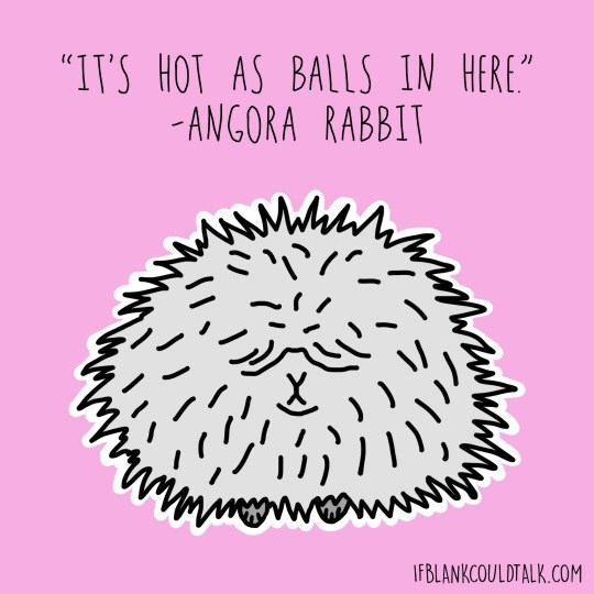 "Text - ""IT'S HOT AS BALLS IN HERE -ANGORA RABBIT w IFBLANKCOULDTALK.COM"