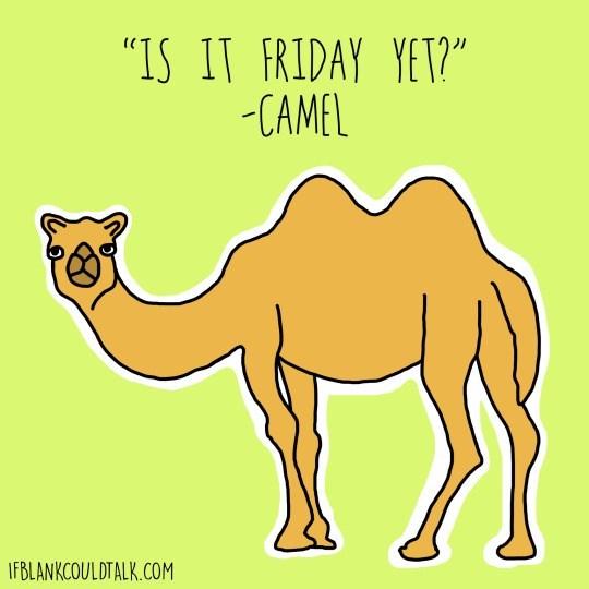 "Camel - ""IS IT FRIDAY YET?"" -CAMEL IFBLANKCOULDTALK.COM"