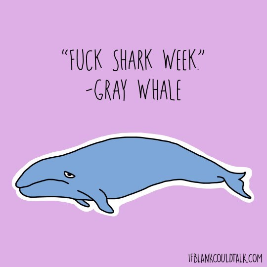 "Marine mammal - ""FUCK SHARK WEEK"" -GRAY WHALE IFBLANKCOULDTALK.COM"