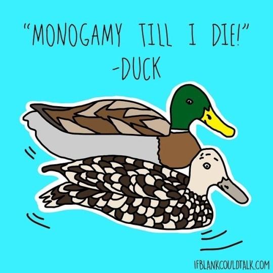 "Bird - ""MONOGAMY TILL I DIE"" -DUCK IFBLANKCOULDTALK.COM"