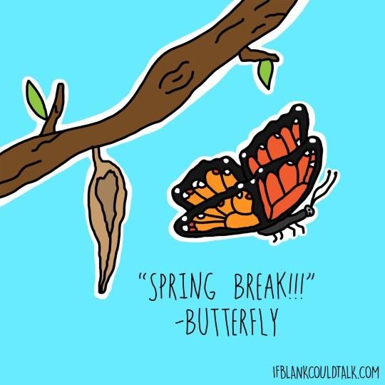 "Organism - ""SPRING BREAKII"" BUTTERFLY IFBLANKCOULDTALK.COM"