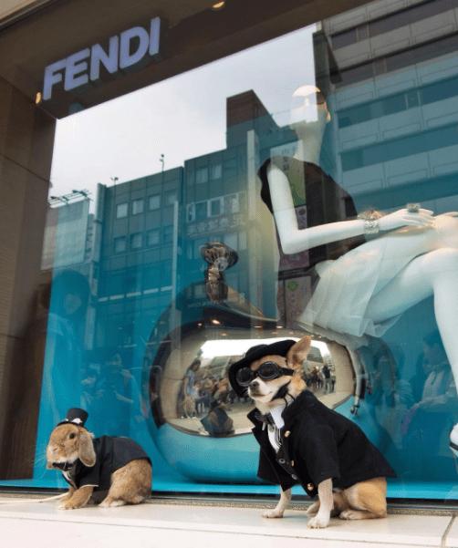 Dog - FENDI