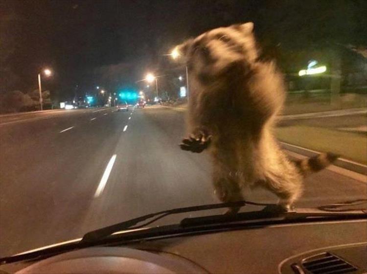 animal photos - Mode of transport