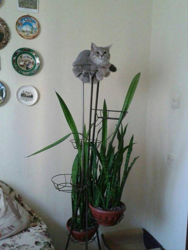 animal photos - Flower