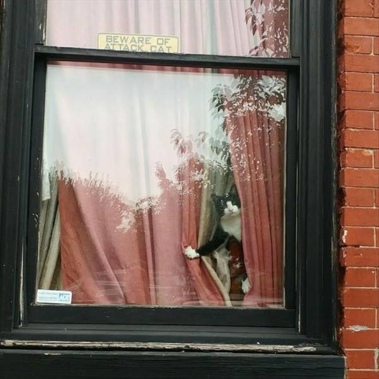 animal photos - Window - BEWARE OF AT TACK CAT ADT