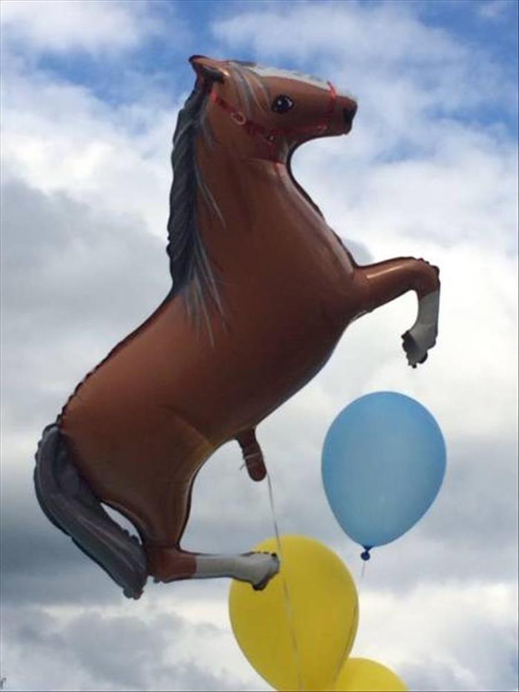 animal photos - Horse