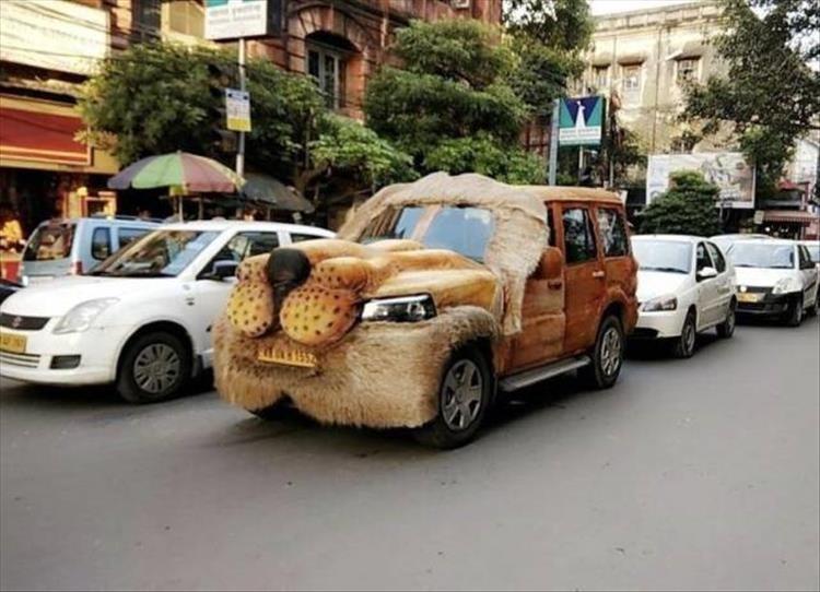 animal photos - Land vehicle