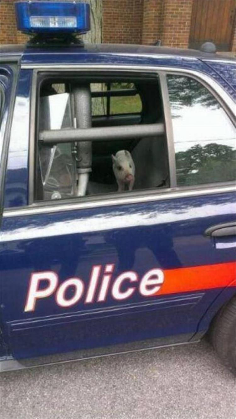 animal photos - Land vehicle - Police