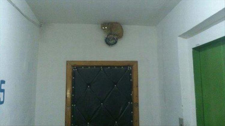animal photos - Ceiling