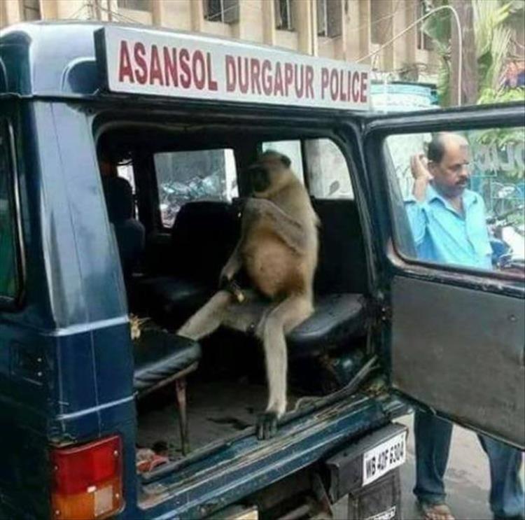 animal photos - Vehicle - ASANSOL DURGAPUR POLICE