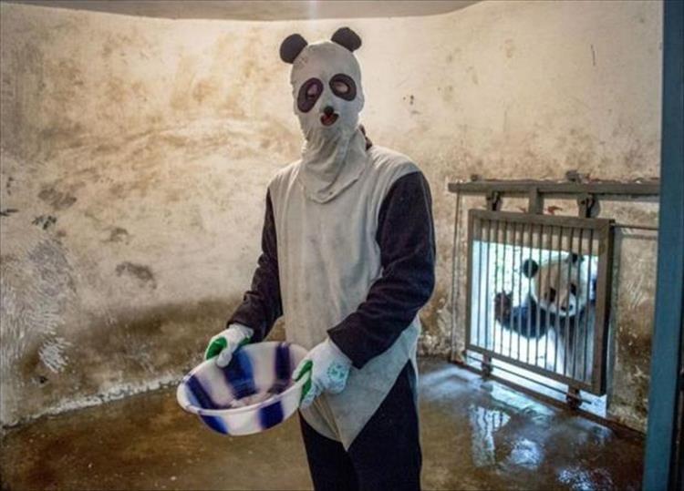 animal photos - Mask