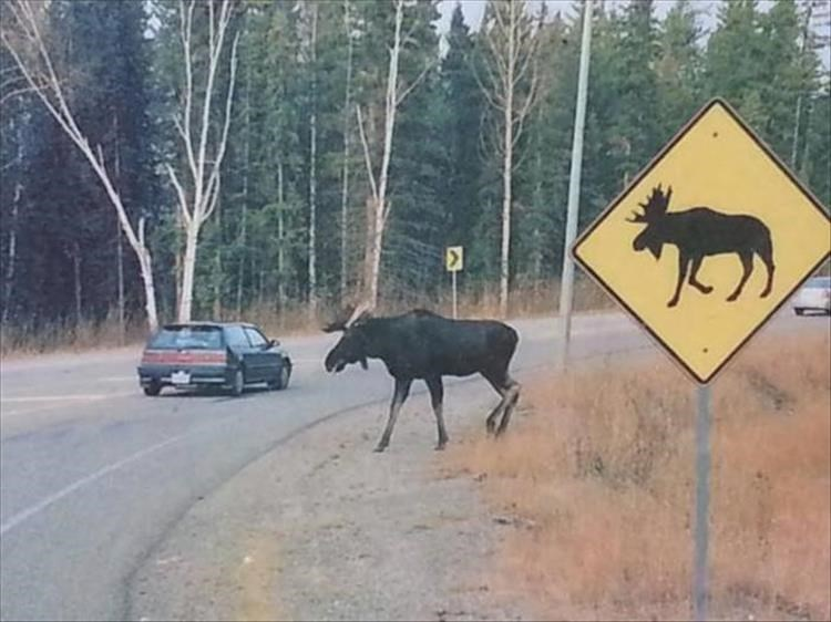 animal photos - Traffic sign