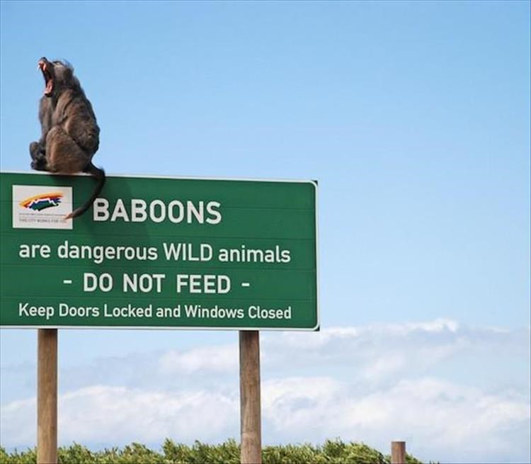 animal photos - Signage - BAB0ONS are dangerous WILD animals - DO NOT FEED Keep Doors Locked and Windows Closed