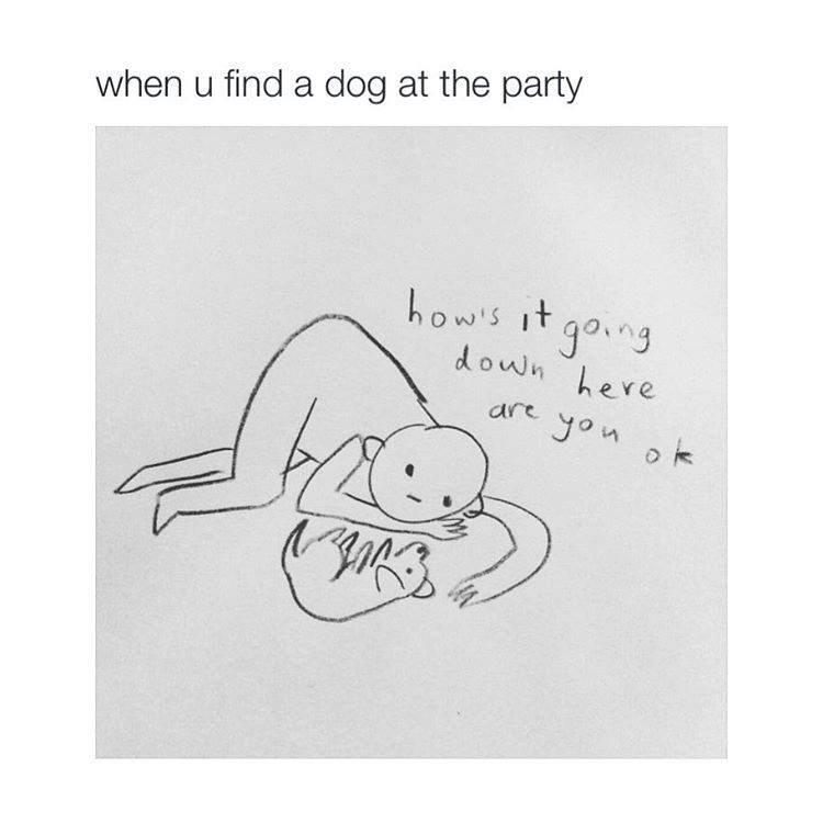 Text - when u find a dog at the party howis it gong down here are yon ok