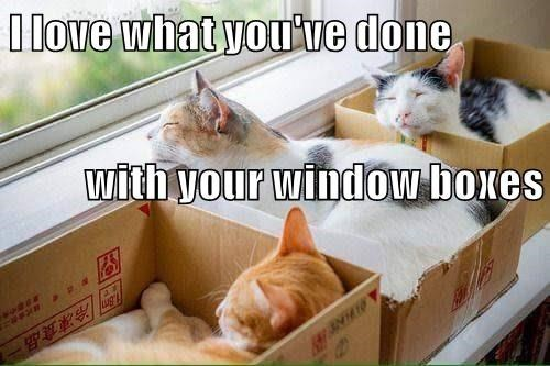 cats in boxes by the window