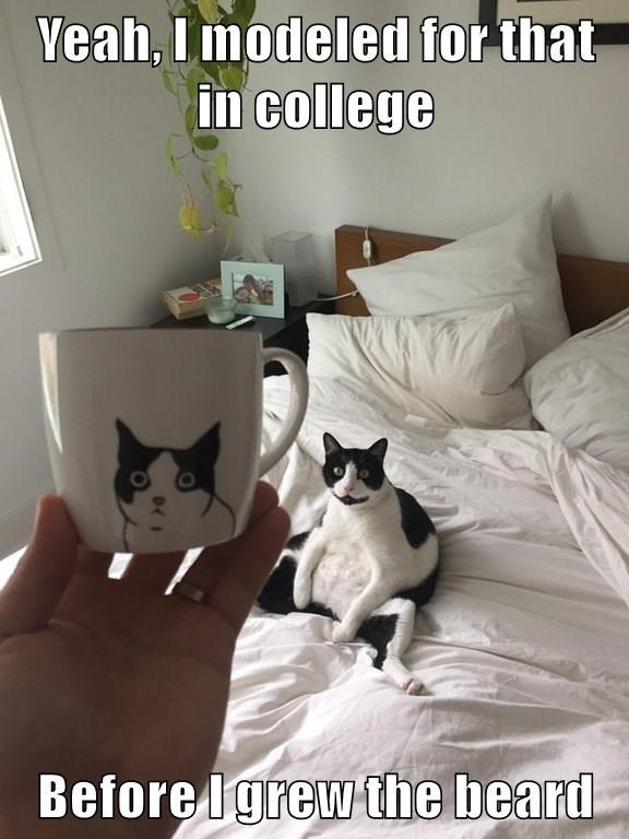 funny cat meme of a cat with picture on a mug with caption that she modeled for that when she was in college.
